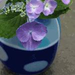 flowerbase13
